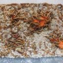 Tecnologia alimentare: camole della farina, allevarle o eliminarle?