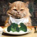 L'alimentazione corretta per gli animali domestici