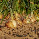 Come costruire un orto rialzato