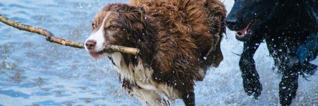 Consigli per lavare il proprio cane