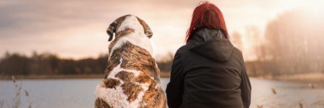 Avere un cane fa bene alla salute: ecco perché, e cosa sapere prima di prenderlo