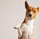 Pedigree per cani di razza: come richiederlo?